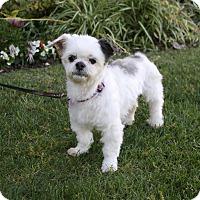 Adopt A Pet :: BELINDA - Newport Beach, CA