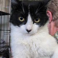 Adopt A Pet :: Lexie - Reeds Spring, MO