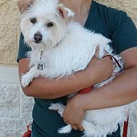 Adopt A Pet :: Erica - Palmdale, CA