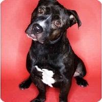 Adopt A Pet :: Hercules - Scottsdale, AZ