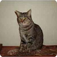 Adopt A Pet :: Princess - Milwaukee, WI