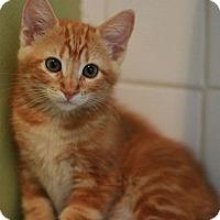 Adopt A Pet :: Maxwell - Canoga Park, CA
