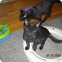 Adopt A Pet :: Sweet Baby - Riverside, RI