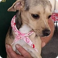 Adopt A Pet :: Dixie - Gainesville, FL