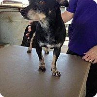 Adopt A Pet :: Gracie - Lake Placid, FL