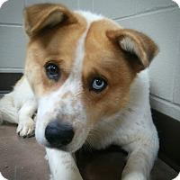 Adopt A Pet :: Milton - Wilmington, OH