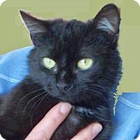 Adopt A Pet :: Rita Rose - Colmar, PA