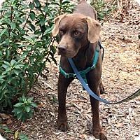Adopt A Pet :: Buddy - Charleston, SC