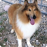 Adopt A Pet :: Bryce- New 5/23 - Stephenville, TX