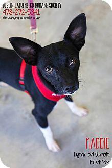 Feist Mix Dog for adoption in Dublin, Georgia - Maddie