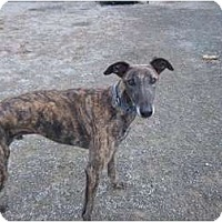 Adopt A Pet :: Leon - Roanoke, VA