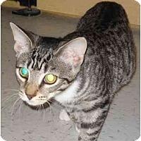 Adopt A Pet :: Maui - Jenkintown, PA