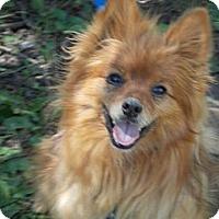 Adopt A Pet :: FINLEY - Hesperus, CO