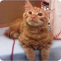 Adopt A Pet :: Alex - Summerville, SC
