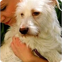 Adopt A Pet :: Phillip - Mission Viejo, CA