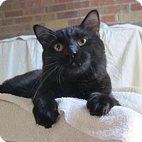 Adopt A Pet :: Harmon (loving & social) - Roseville, MN