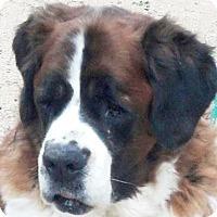 Adopt A Pet :: ADDY - Glendale, AZ