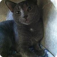 Adopt A Pet :: Jubilee - Trevose, PA