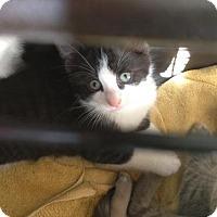 Adopt A Pet :: Clint - Hamilton, ON