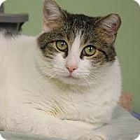 Adopt A Pet :: Tommy - Yukon, OK