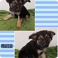 Adopt A Pet :: Gordo-pending adoption - Manchester, CT