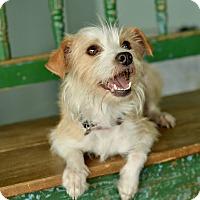Adopt A Pet :: Carmela - San Antonio, TX