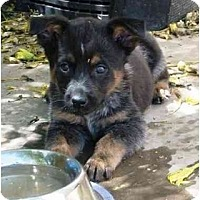 Adopt A Pet :: Windsor - Phoenix, AZ