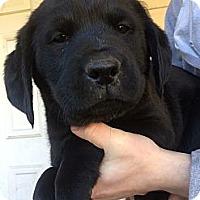 Adopt A Pet :: Eve - Fort Valley, GA