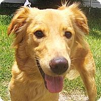 Adopt A Pet :: Galen - Orange Park, FL