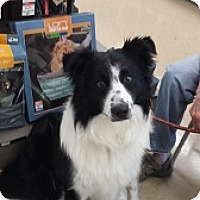 Adopt A Pet :: Nick - Oliver Springs, TN