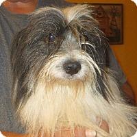Adopt A Pet :: Aaron - Greenville, RI