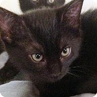 Adopt A Pet :: Nikki - Irvine, CA