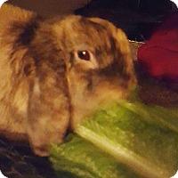 Adopt A Pet :: Cindy Lopper - Williston, FL