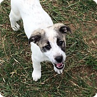 Adopt A Pet :: Sterling - Woodward, OK