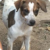 Adopt A Pet :: Janga - Spring Valley, NY