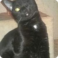 Adopt A Pet :: Xander - Colorado Springs, CO