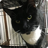 Adopt A Pet :: Fritz - Saylorsburg, PA