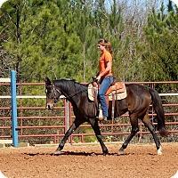 Thoroughbred for adoption in Seneca, South Carolina - Wonder $3300