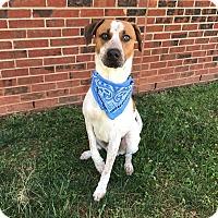 Adopt A Pet :: BAXTER - Lexington, NC
