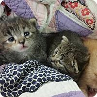 Adopt A Pet :: GORE LITTER - Houston, TX