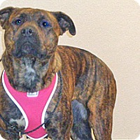 Adopt A Pet :: Neaveh - Wildomar, CA