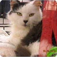 Adopt A Pet :: Hope - Riverside, RI