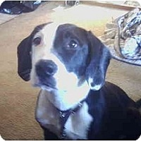 Adopt A Pet :: Isis - Flint (Serving North and East TX), TX
