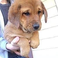Adopt A Pet :: Prancer - Fort Valley, GA
