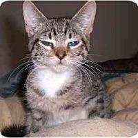 Adopt A Pet :: Vinny - Lombard, IL
