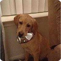 Adopt A Pet :: Bentley - Alliance, NE