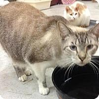Adopt A Pet :: Nikko - Miami, FL