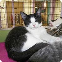 Adopt A Pet :: Toco - Dover, OH
