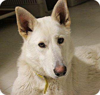 German Shepherd Dog Dog for adoption in New Richmond,, Wisconsin - O'Malley