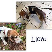 Adopt A Pet :: Lloyd - Marietta, GA